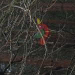 Ein bunter Holzvogel im Bau - einer der angesteuerten Punkte